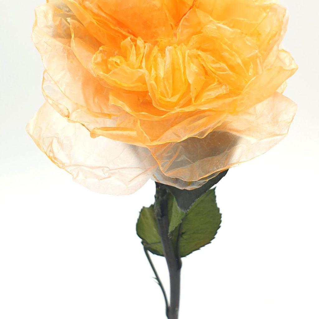 Rose de sac en plastique